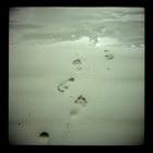 Title : Sur le sable, baie d'Audierne, Bretagne, Ao?t 2004. Camera : Diana Clone  'RiderDigest' - 4x4 Max. Print Size : 6000x6000 pixels (24'x24' - 60x60 cm.) Author : Pascal Labrouill?re  Views: 2321 Date: 12.08.04 800x800 (385.4 KB)