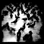 Title : Pigeons, Bd St-Denis, Paris, noir & blanc, Juillet 2004. Camera : Diana F - 4x4. Max. Print Size : 6000x6000 pixels (24'x24' - 60x60 cm.) Author : Pascal Labrouill?re  Views: 1936 Date: 01.07.04 800x800 (227.8 KB)
