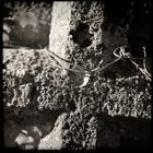 Title : Croix & fil de fer, cimeti?re de St Jean de Paracol, dans l'Aude, Decembre 2005. Camera : Great Wall 6x6 - Portra 400 VC Max. Print Size : 7100x7100 pixels (71x71 cm.) Author : Pascal Labrouill?re  Views: 1053 Date: 02.12.05 450x450 (76.6 KB)